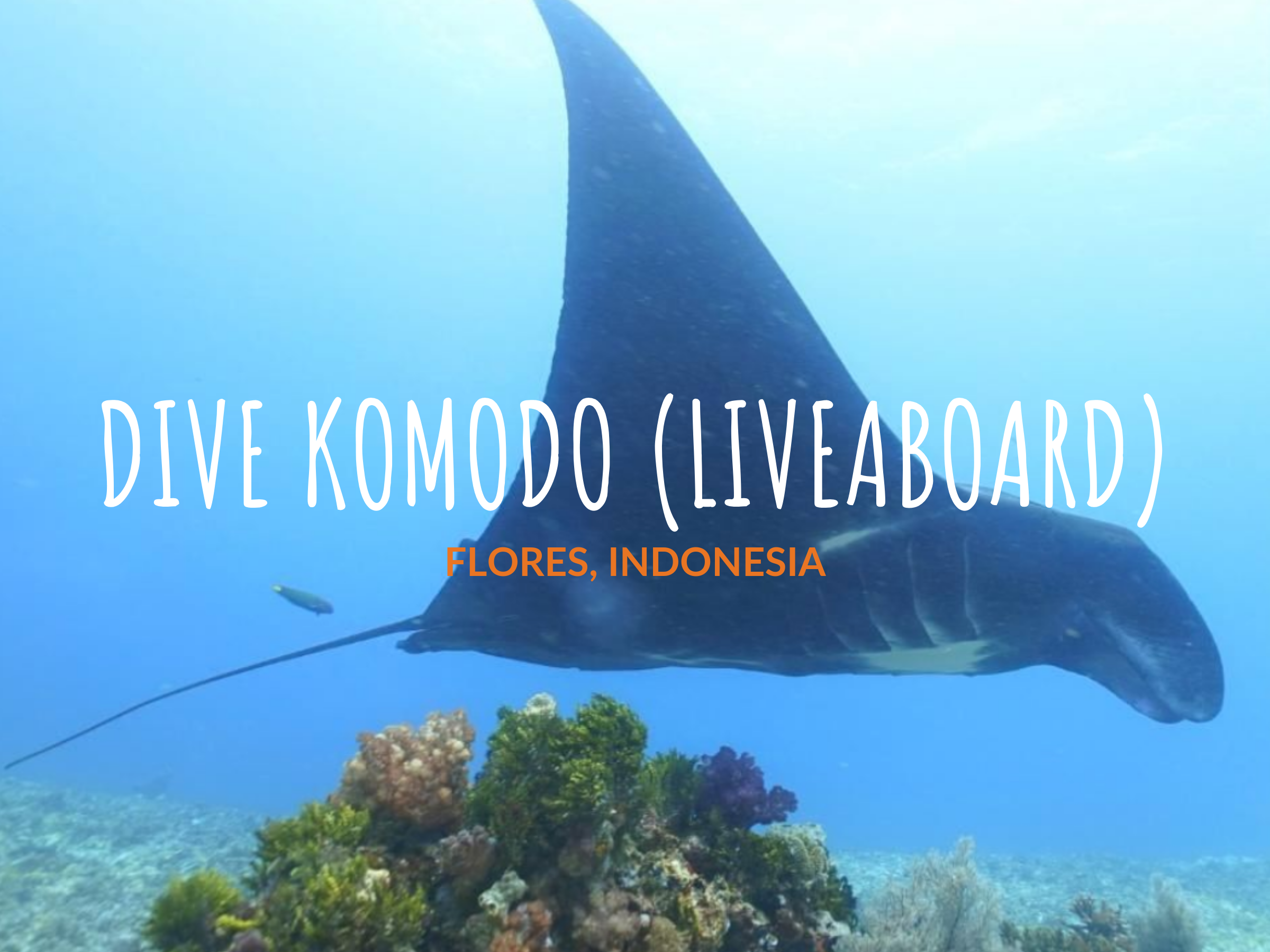South Komodo Liveaboard -