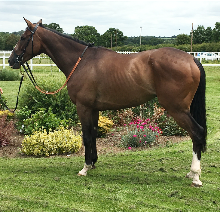 Truckers Tangle - Already with four runner-up efforts in 2019, Truckers Tangle is ready to win! With plenty of racing ahead of him, we expect him to keep the judge busy this upcoming jumps season, providing plenty of excitement for his owners! Exceptional value, the journey is just beginning for this untapped 7YO.5% Share £500 + £110 Monthly fee7YO bay geldingTrainer: Alex Dunn (Wellington, Somerset)