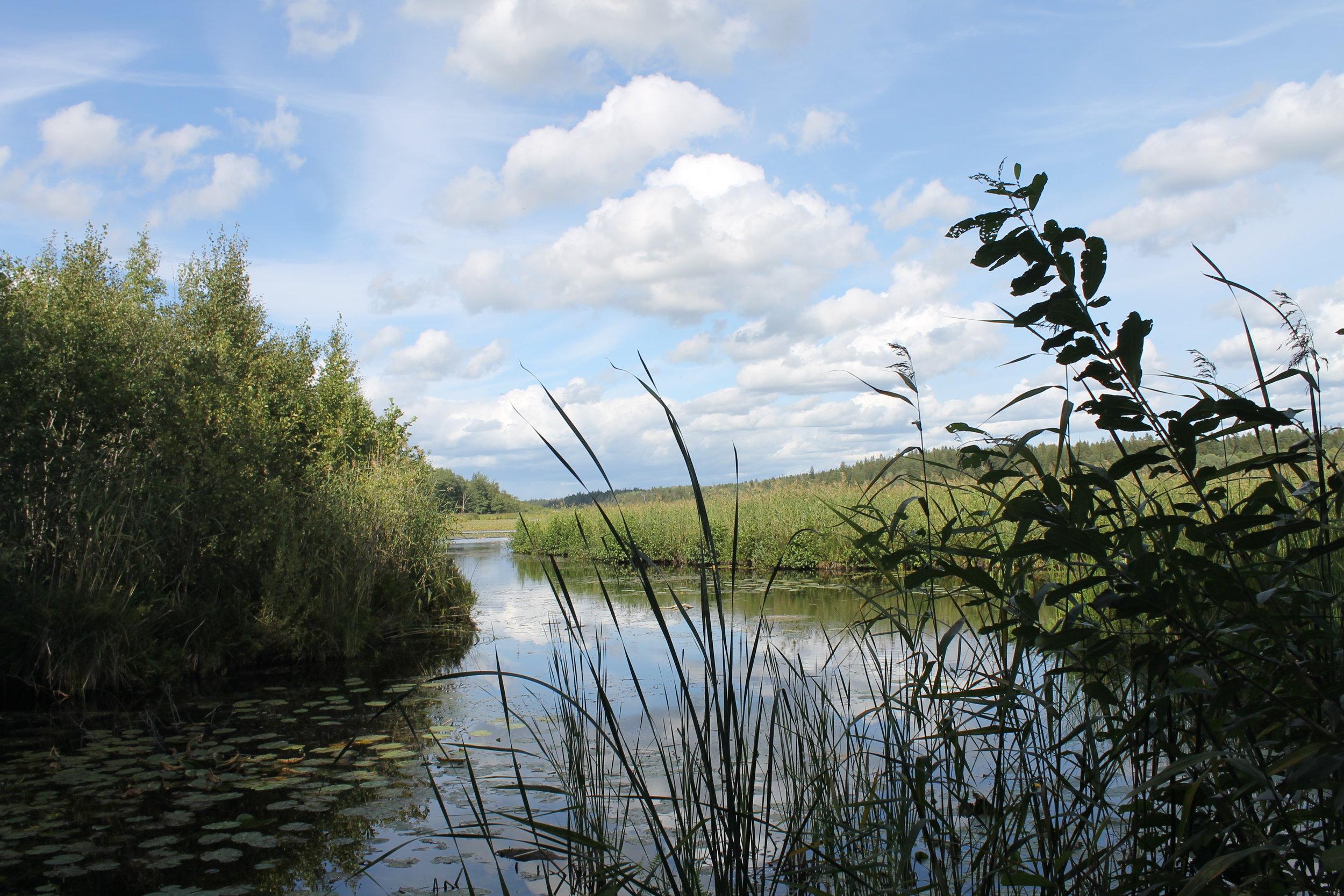 Säbysjön, a beautiful wild lake