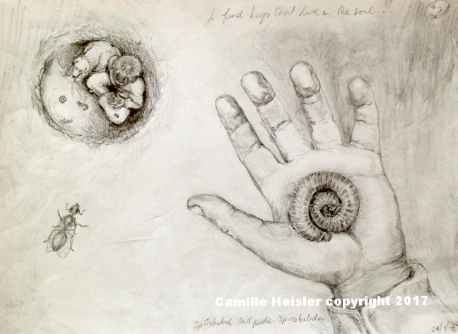 """James and Rosey find a Millipede, Sketch for """"Exploring Soil: A Hidden World Underground"""" Children's Book"""