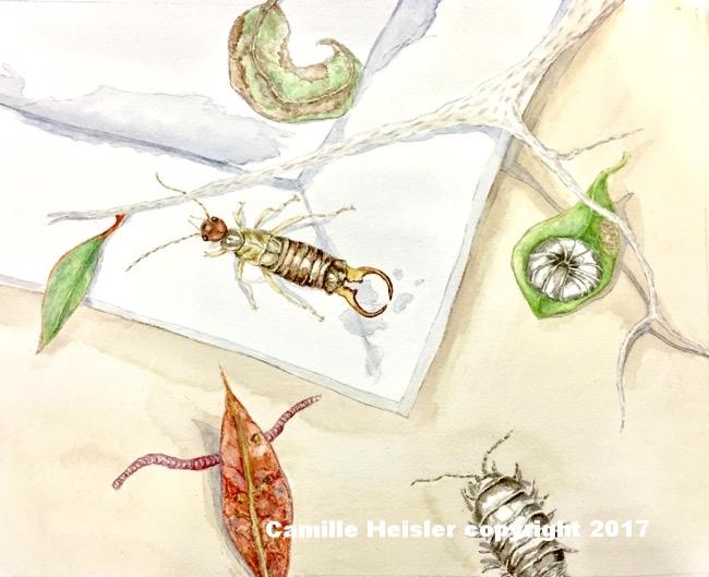 Soily Creatures, Illustration from Exploring Soils: A Hidden World Underground