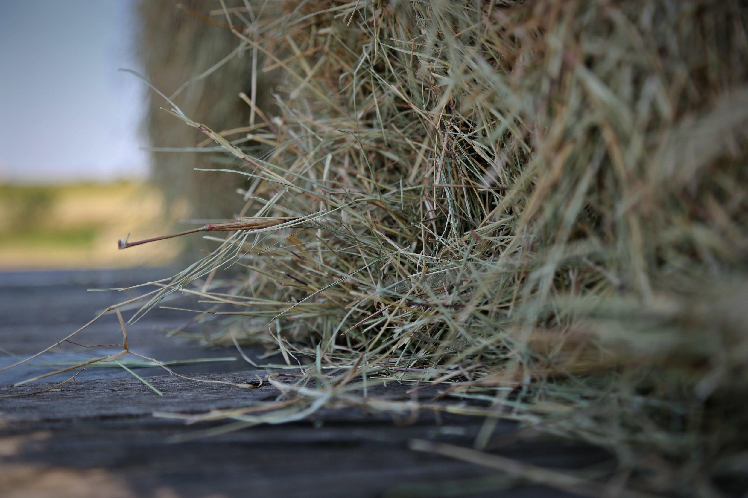 Close hay.jpg