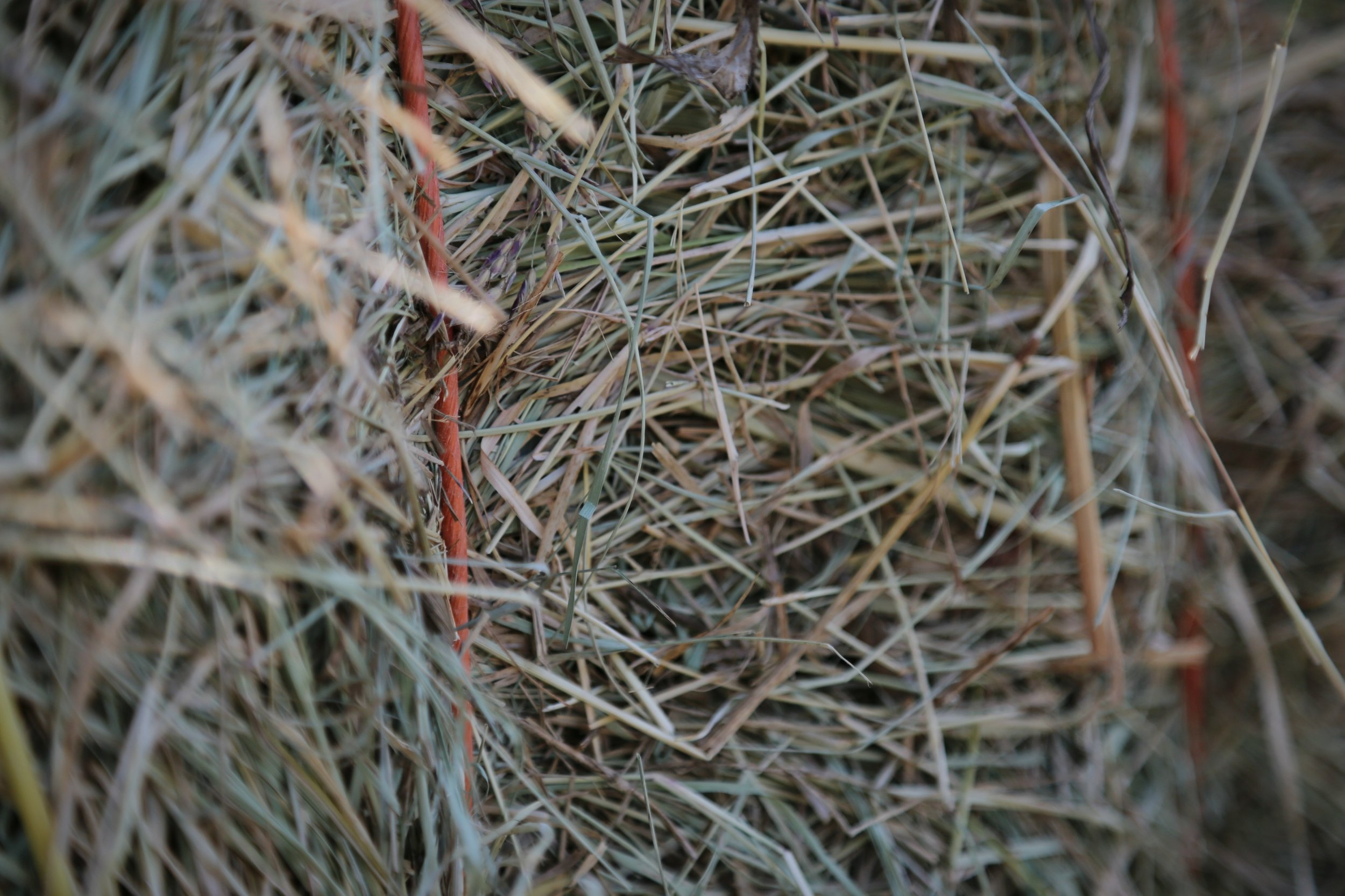 Close hay string.jpg