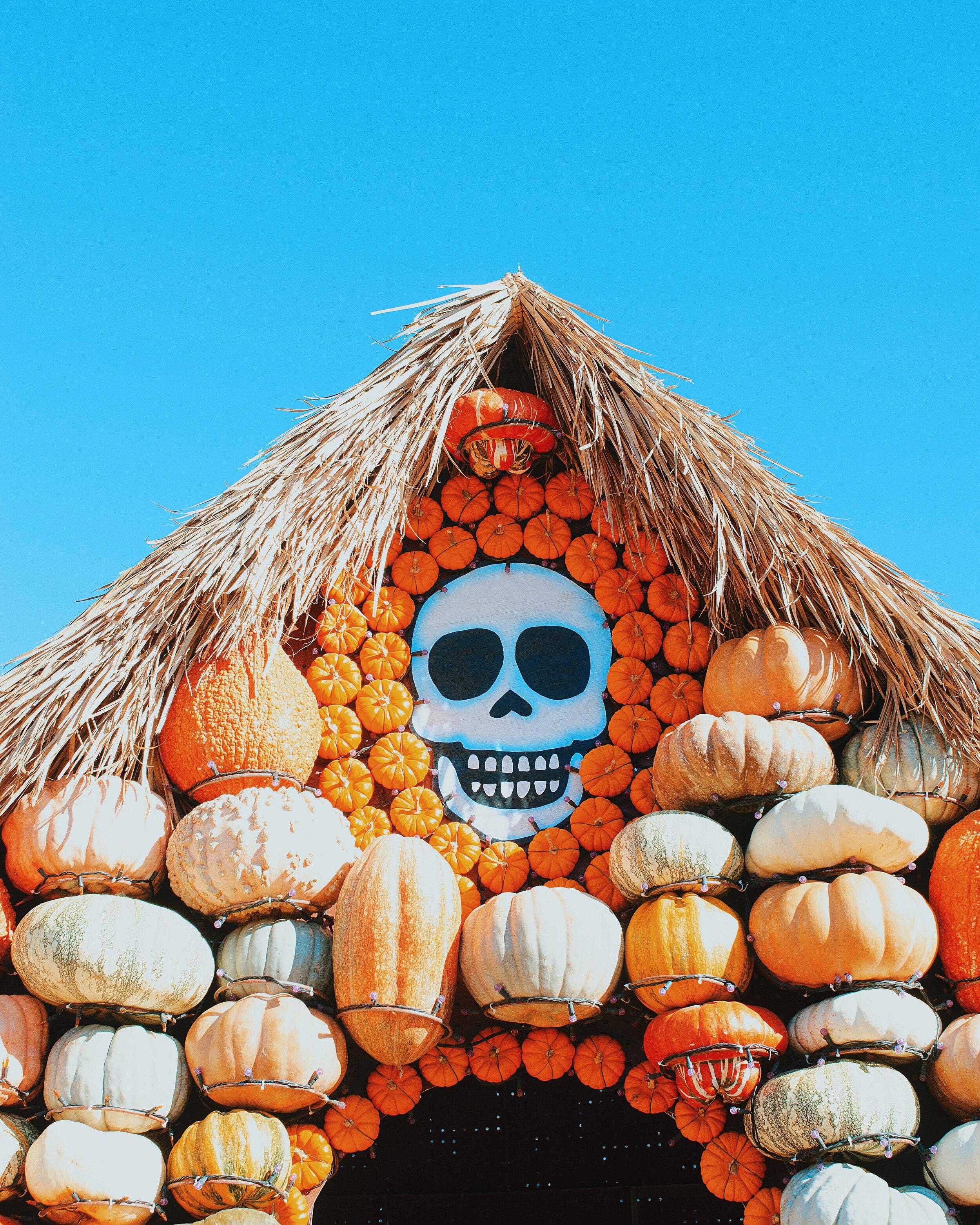 Mr Bones Pumpkin Patch.jpg