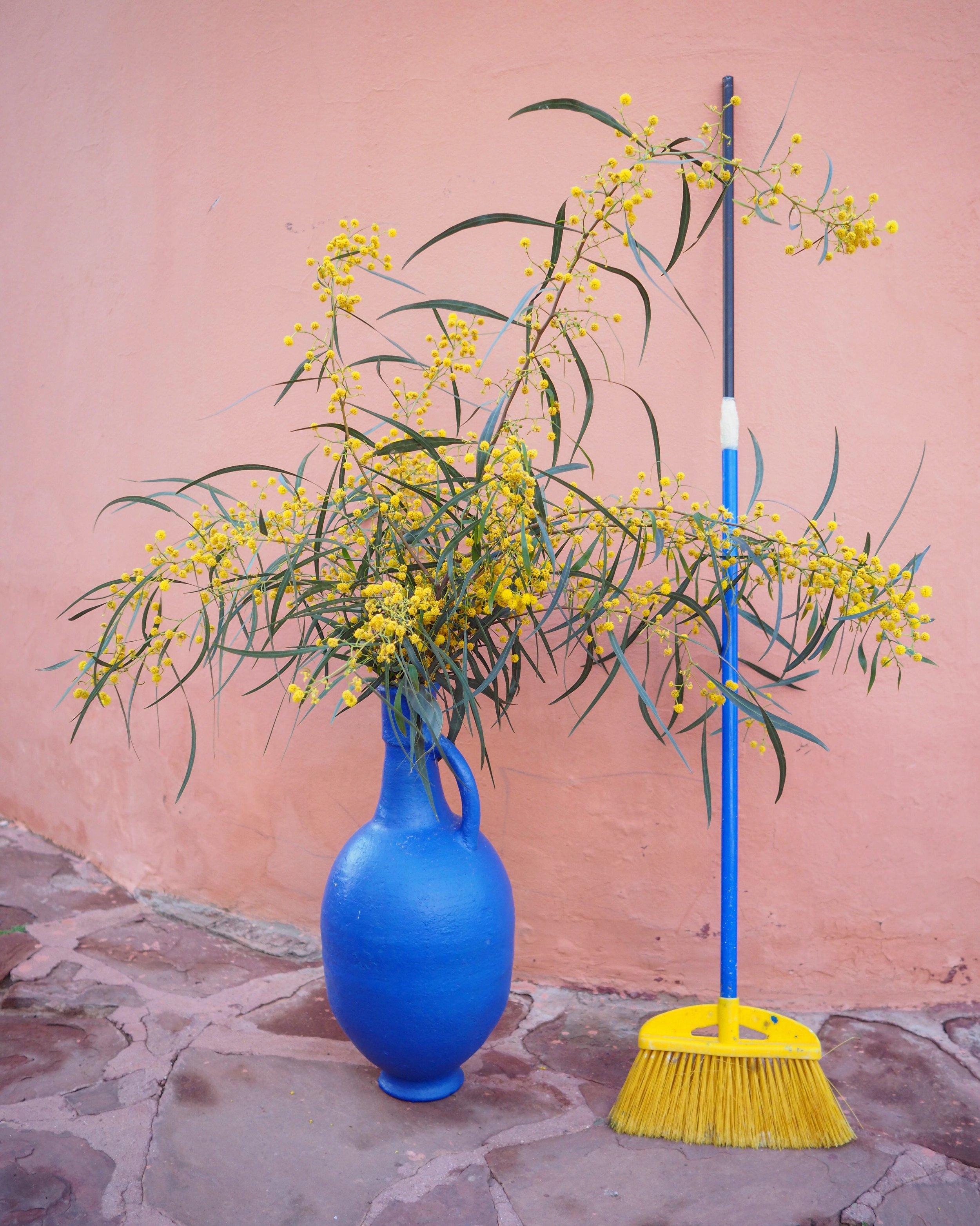 Mimosa flower and gardener Mohamed's broom