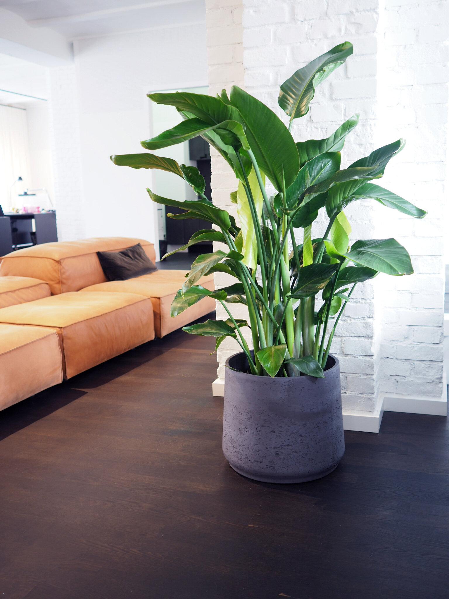 Modern Office Plant Styling In Berlin