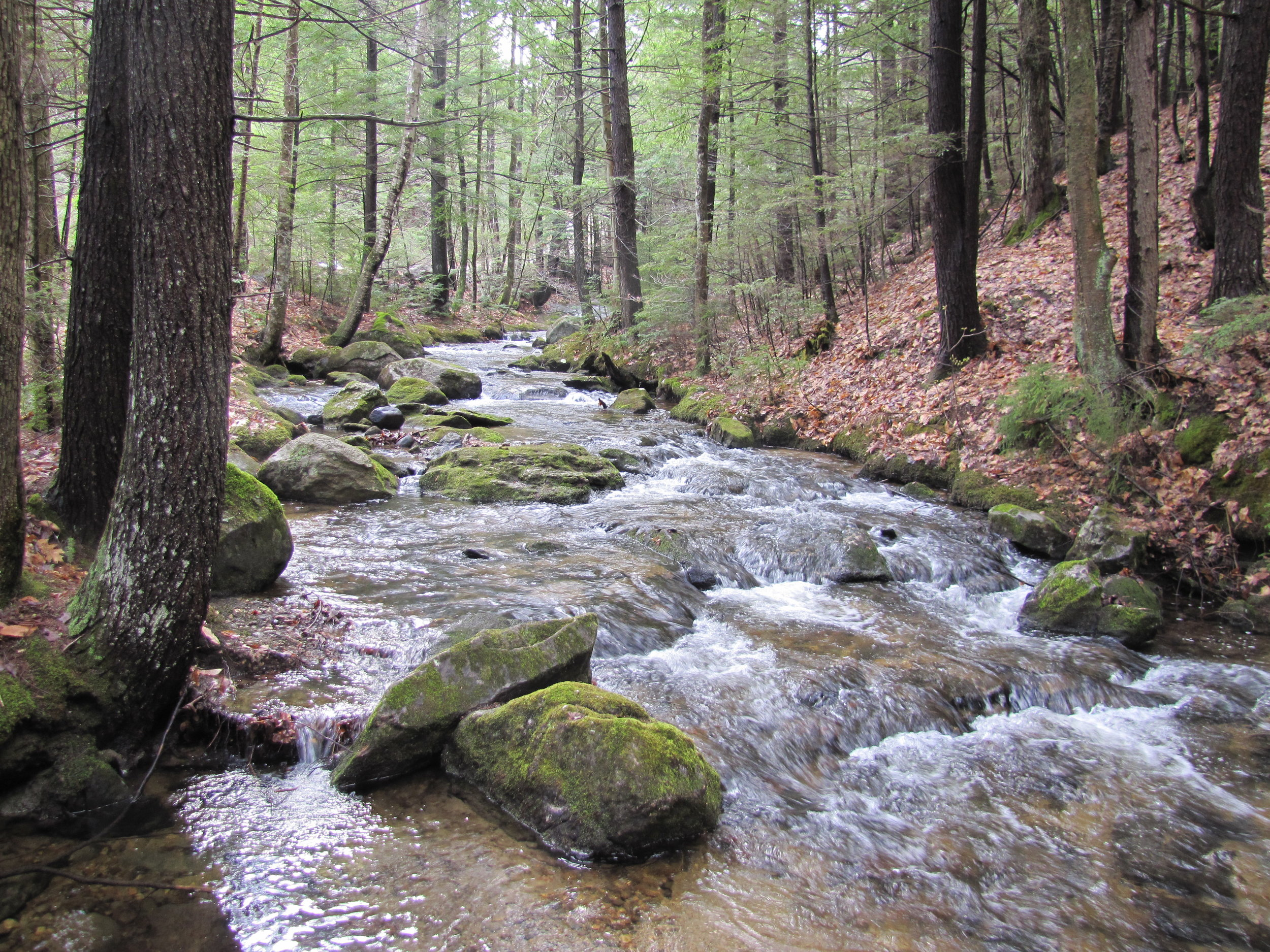Childs Brook 3.jpg