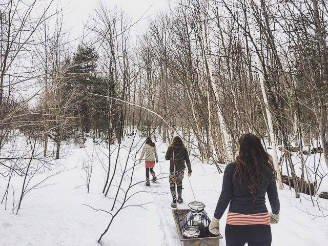 Egg Laying Moon (Mar 25-Apr 22) - Maple sap harvesting and processing