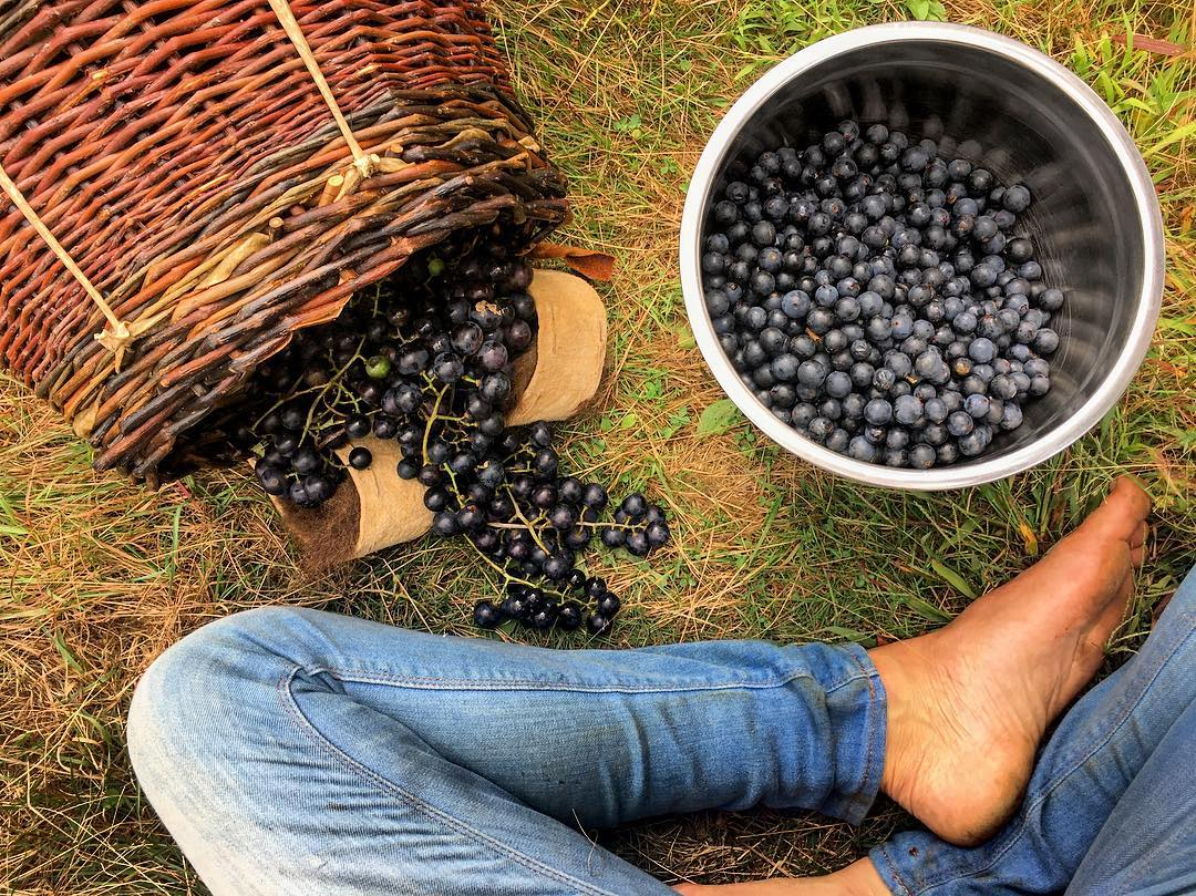 Harvest Moon (Sep 18-Oct 16) - Wild-rice harvesting and processing, berry harvesting, fishing, bear hunting