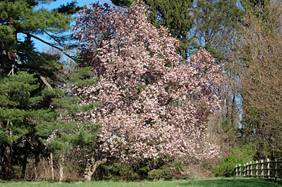 westport-hvr-magnolia(1).jpg