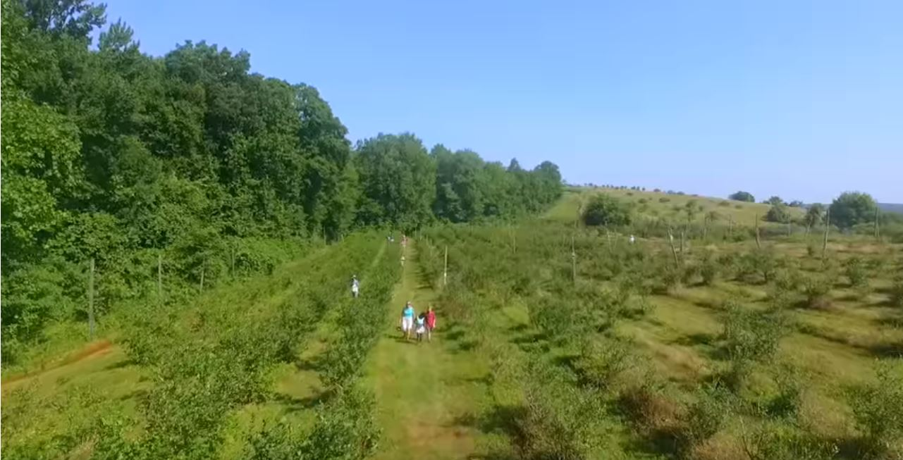 Connecticut has lowest percentage of conserved forest, farmland in New England