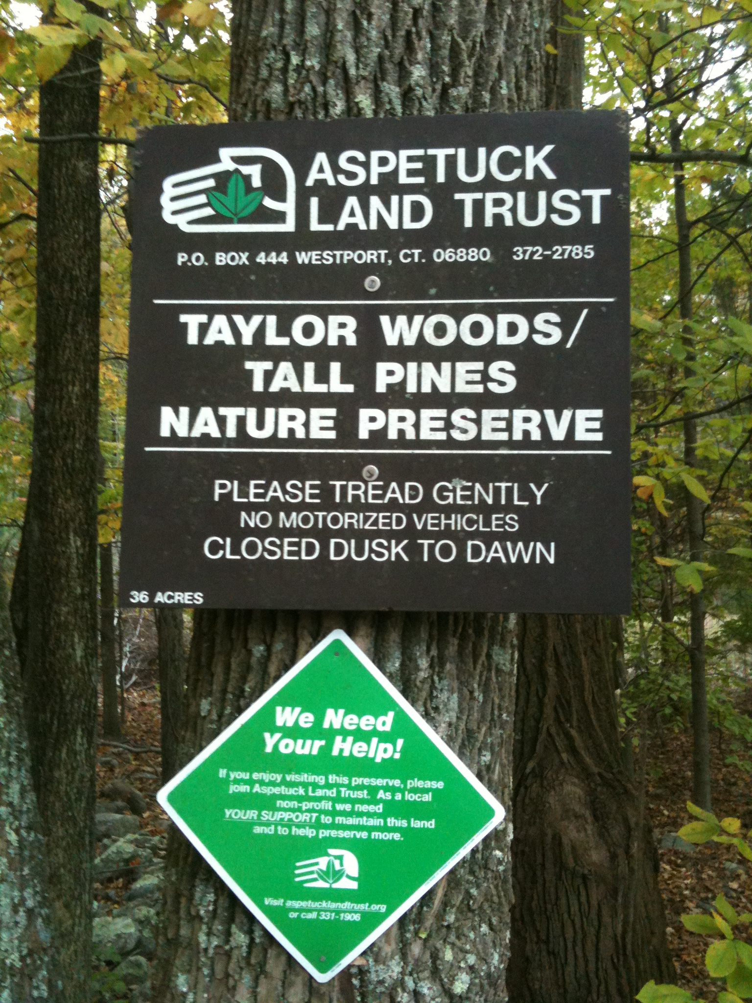 Weston Taylor Woods Tall Pines 2.jpg
