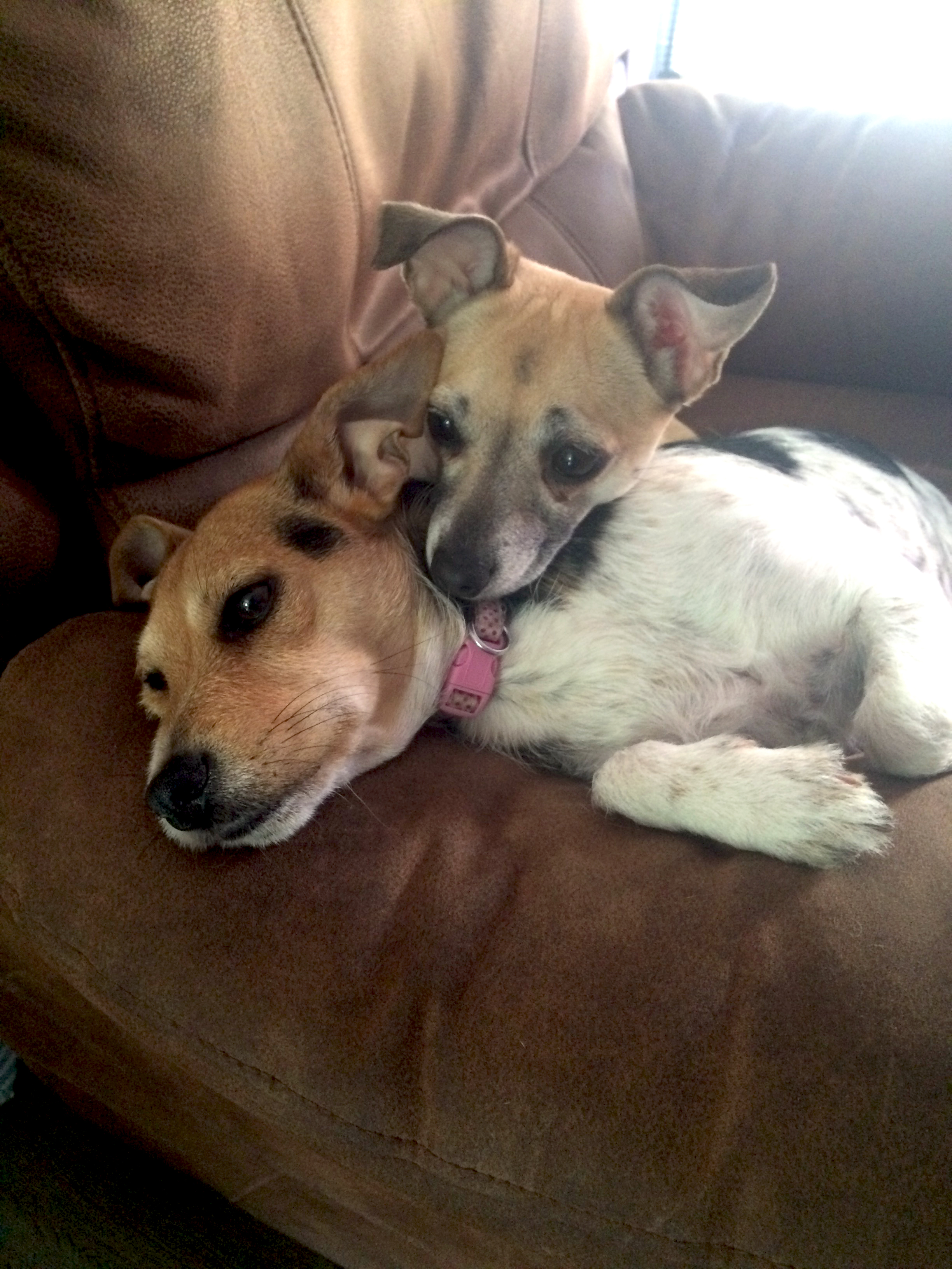 My two dogs relaxing on the chair (Roxy & Ruby)