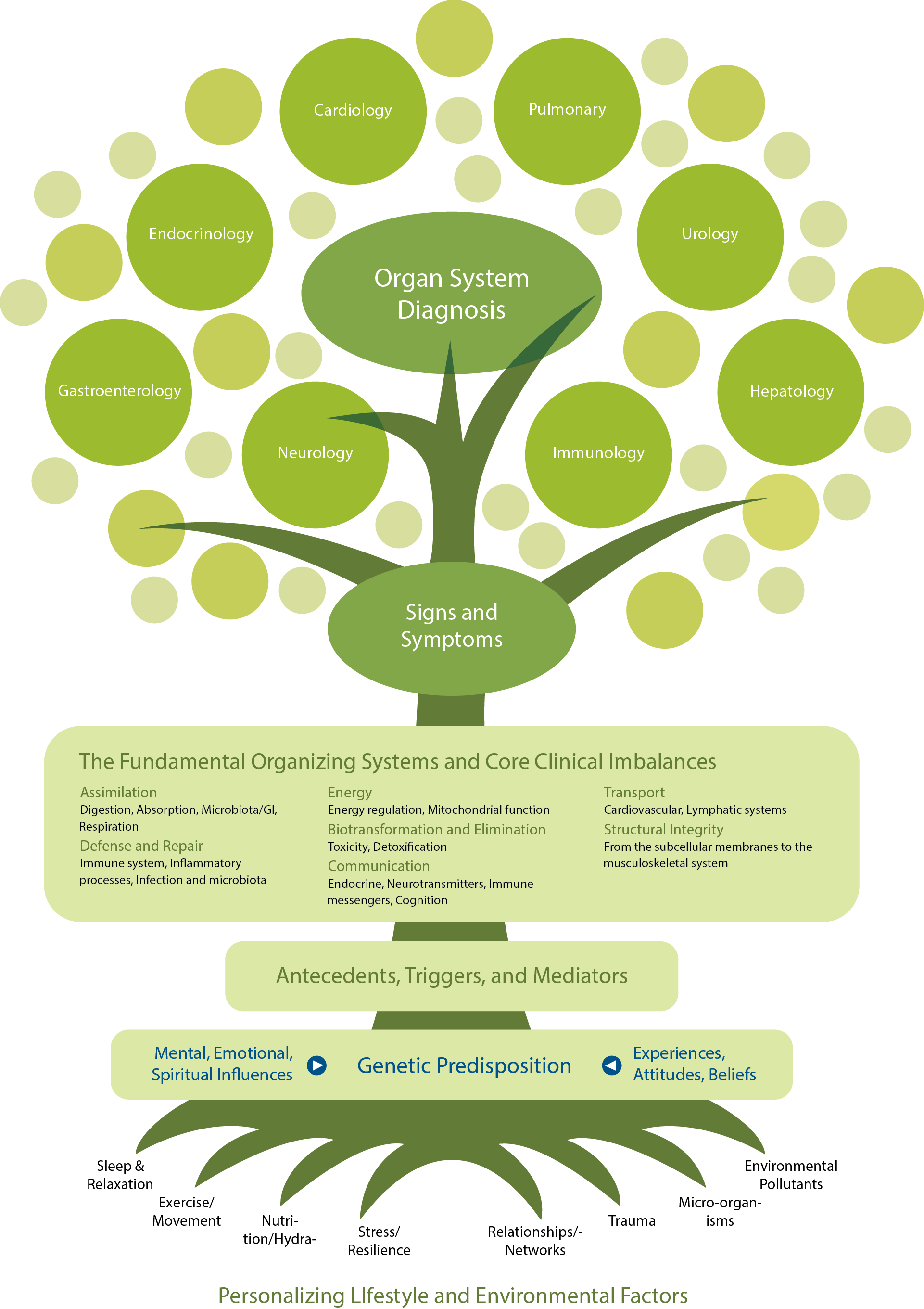 The Functional Medicine Tree          ©️2017 The Institute for Functional Medicine