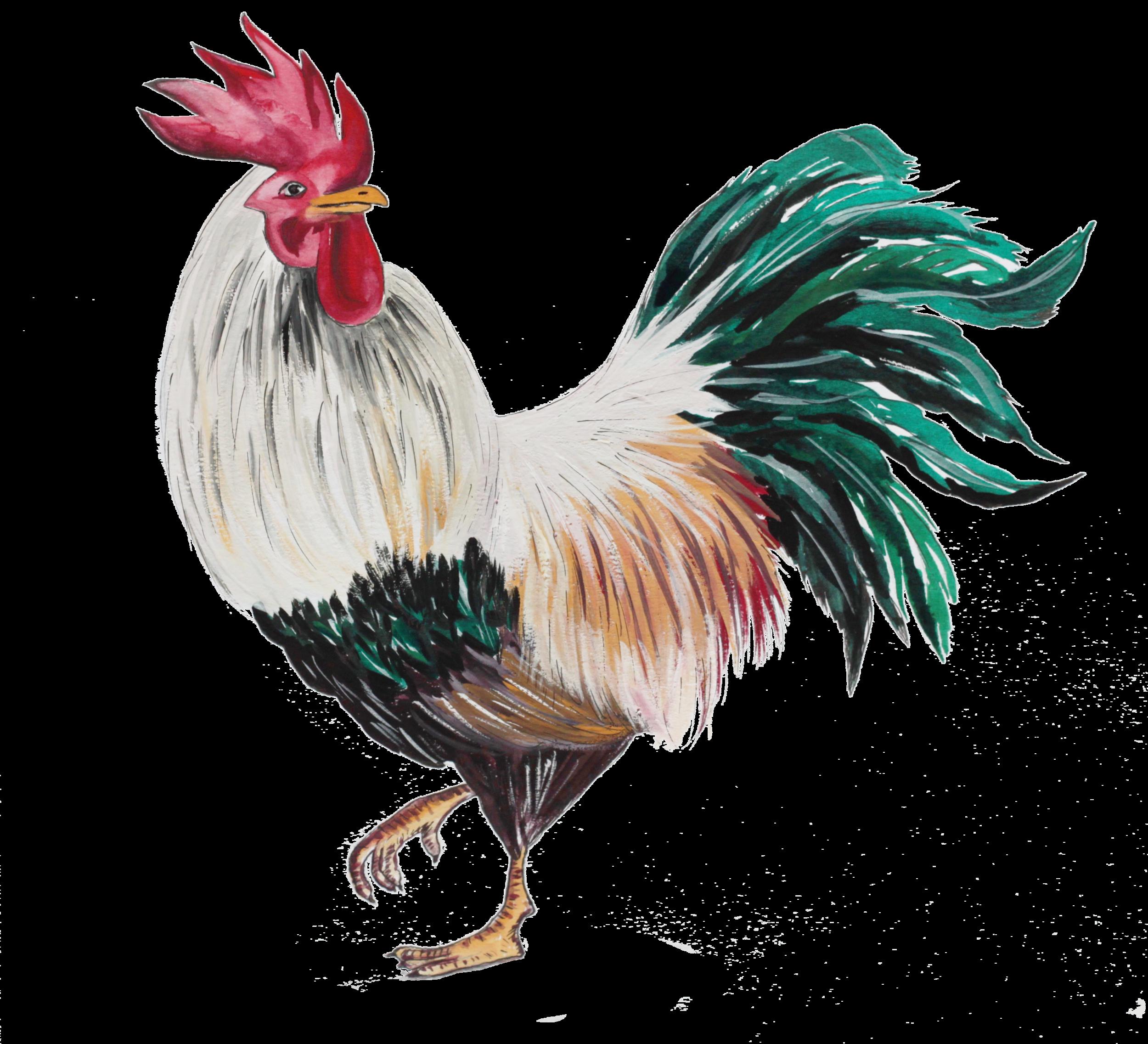 cockerel colour.png