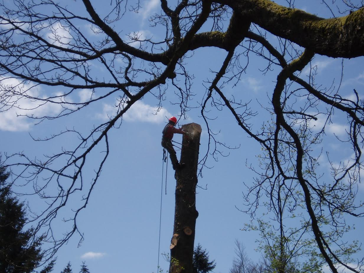 Selective tree removal -