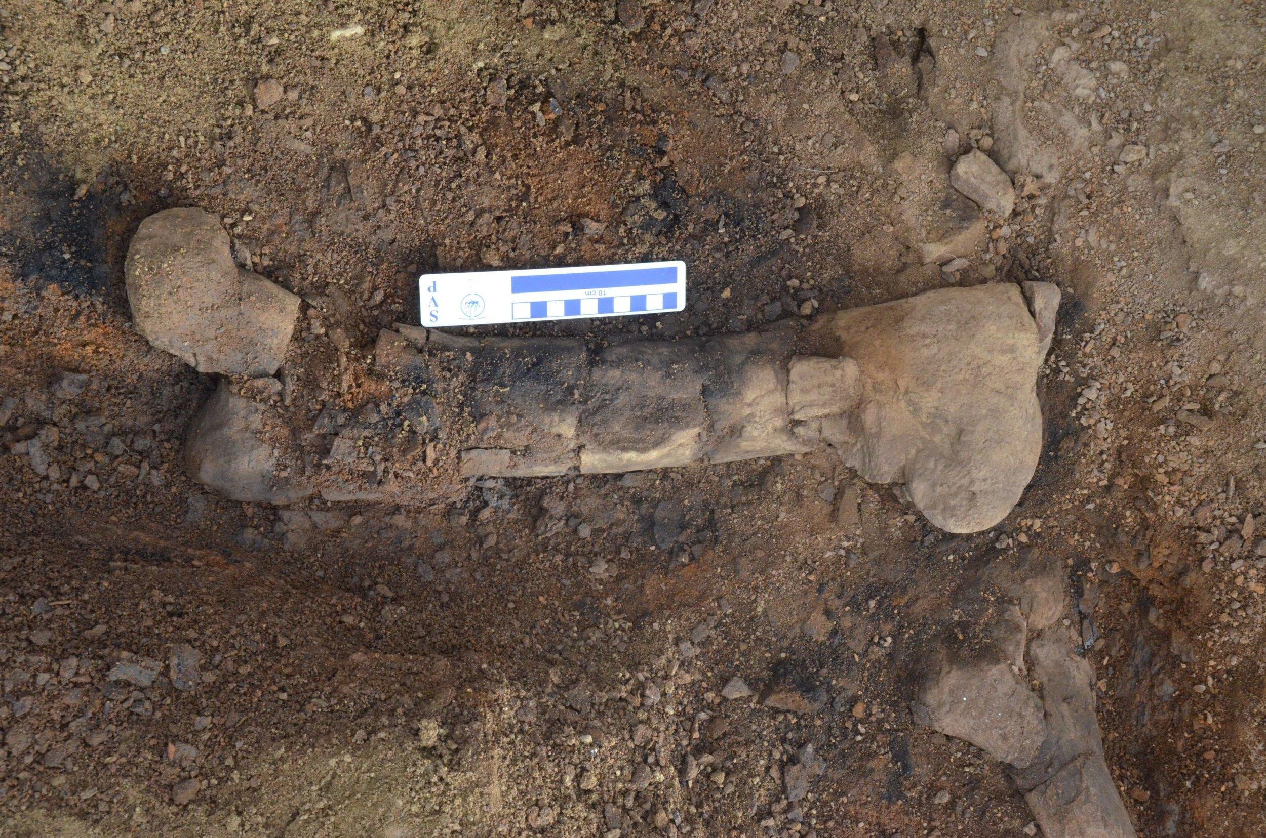 4_hueso de hadrosaurio.JPG