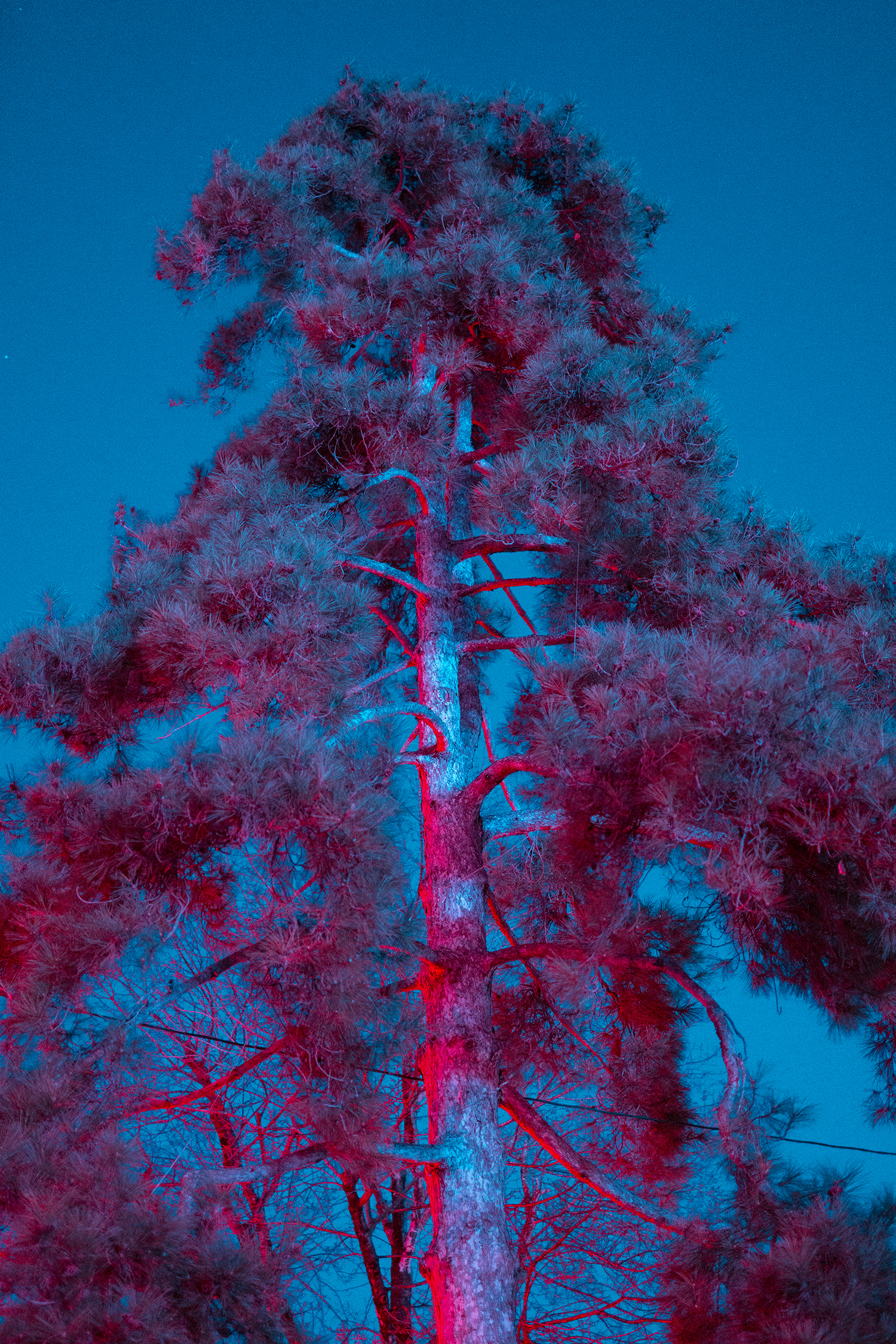 purple night up_17 1500.jpg