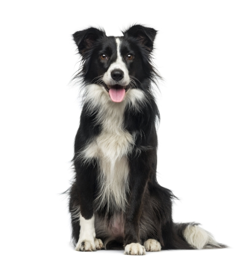 riverside county private dog training