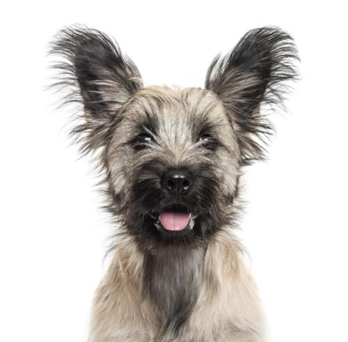 shelter dog rescue dog training temecula, ca
