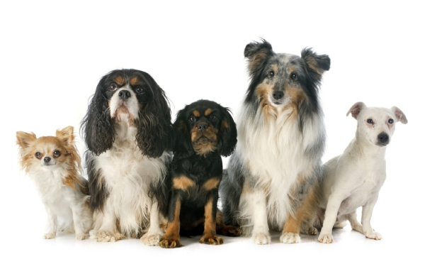 dog training classes temecula ca