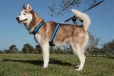 Alpine Outfitters - Urban Trail Harness