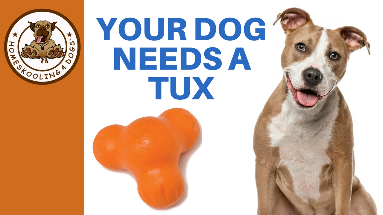 Your Dog Needs A Tux.jpg