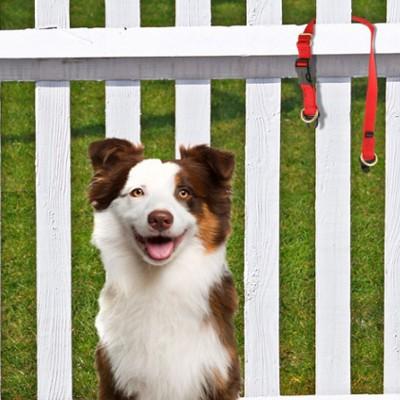 keepsafe-collar-fence-article-thumbnail.jpg