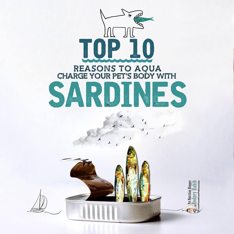 sardines 12074740_812970592145154_7001108028672082169_n.jpg