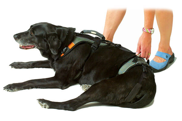 Harnesses — Homeskooling 4 Dogs