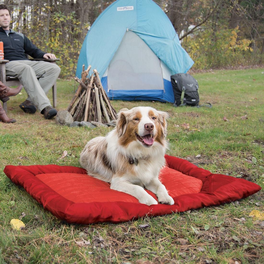 …………Loft Wander Dog Bed