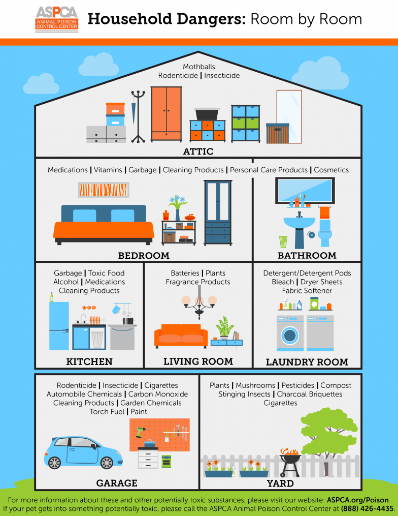 apcc-household-dangers-infographic toxic.png