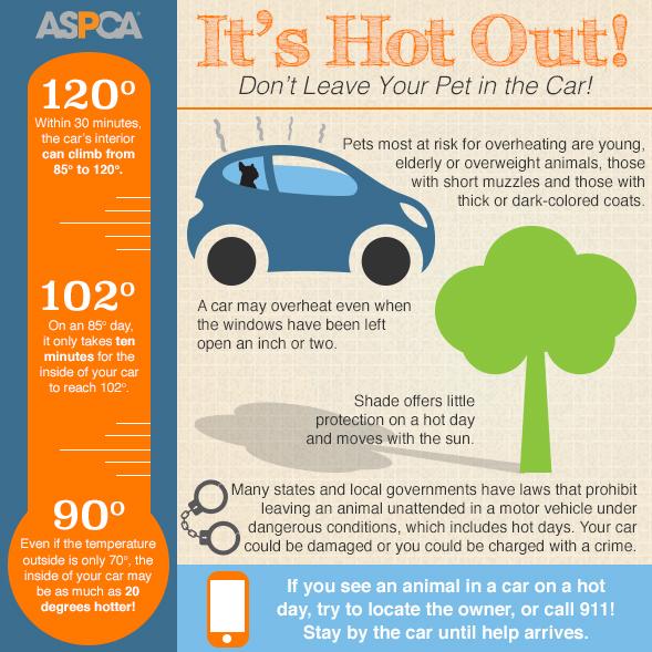 hot-cars-infographic-061815_0-1.jpg