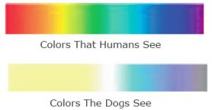 VETERINARY VISION ANIMAL EYE SPECIALISTS