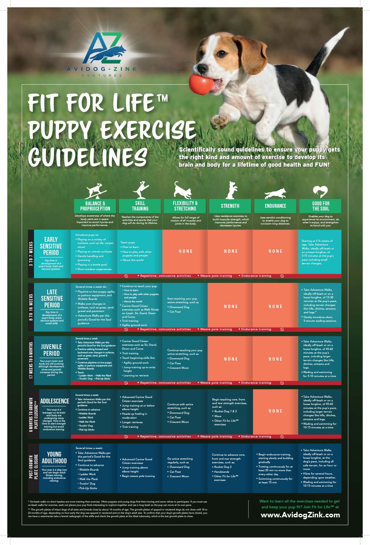 https://www.avidogzink.com/wp-content/uploads/puppy_exercise_guidelines_poster.pdf