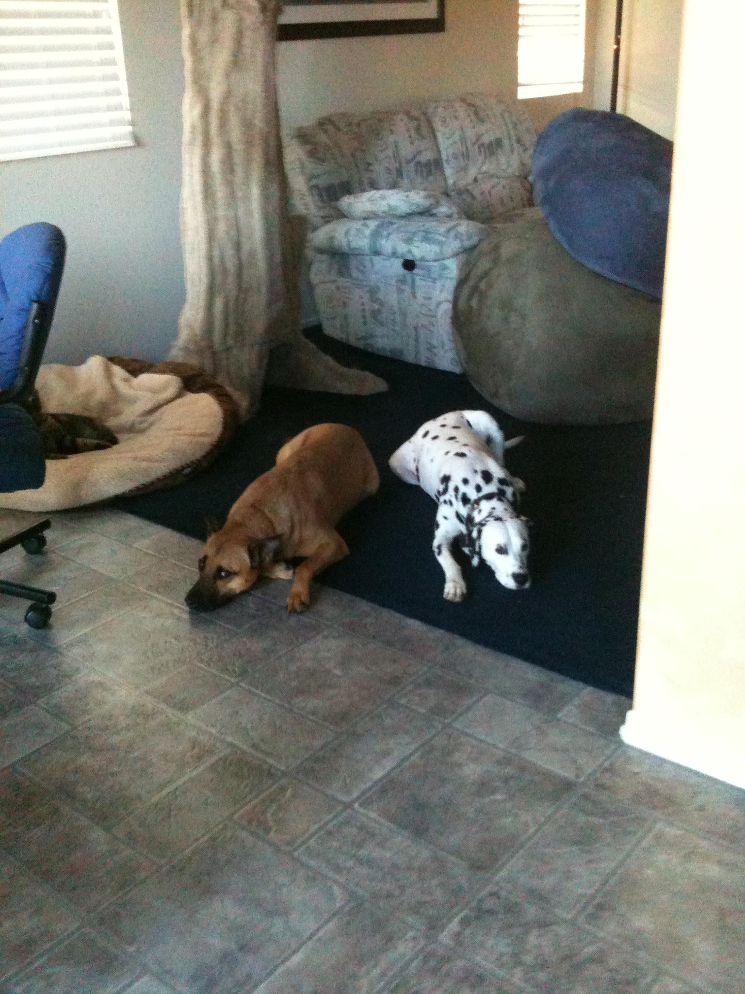 dogs on floor 001.JPG