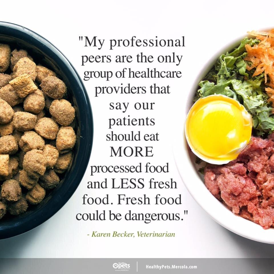 dr karen becker raw diet recipes