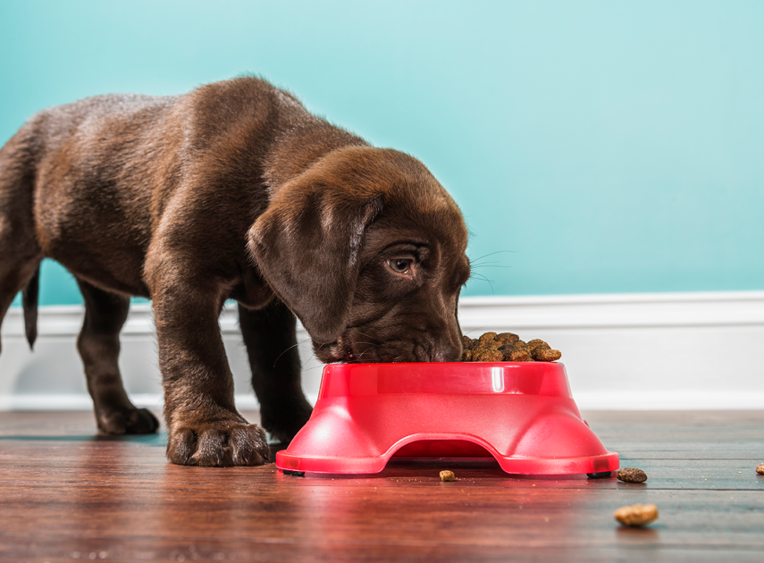 Pet stores and ecommerce
