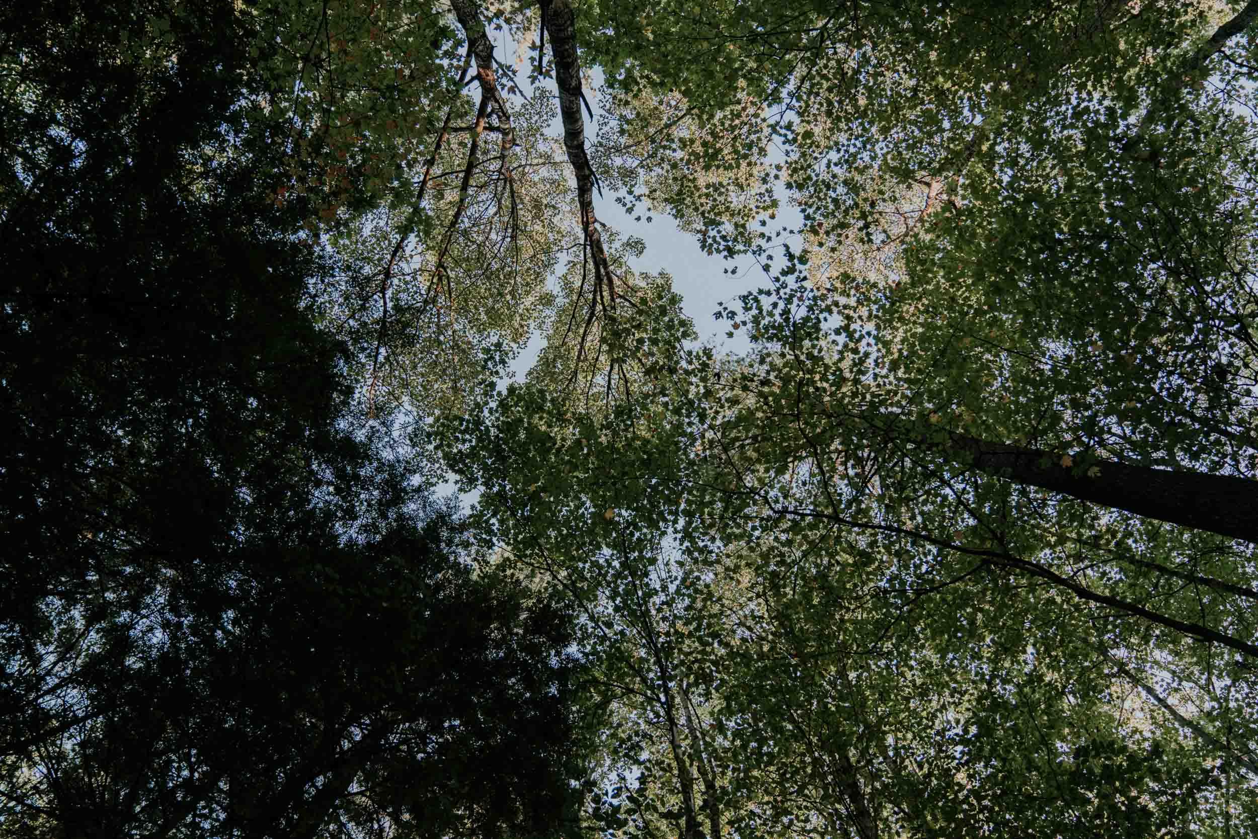 Bledsoe vermont Elopement-114.jpg