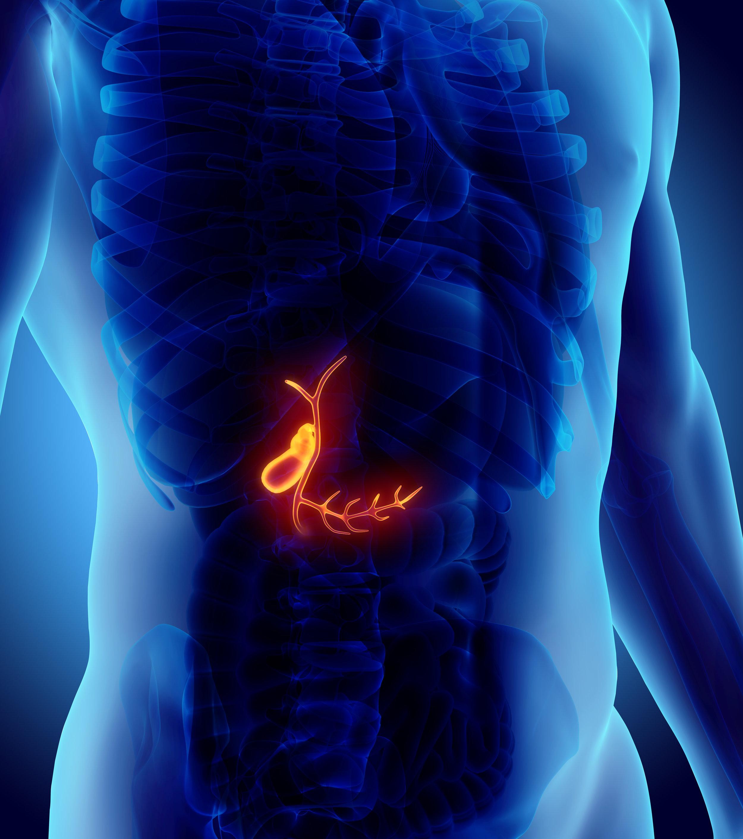 gallbladder-structure