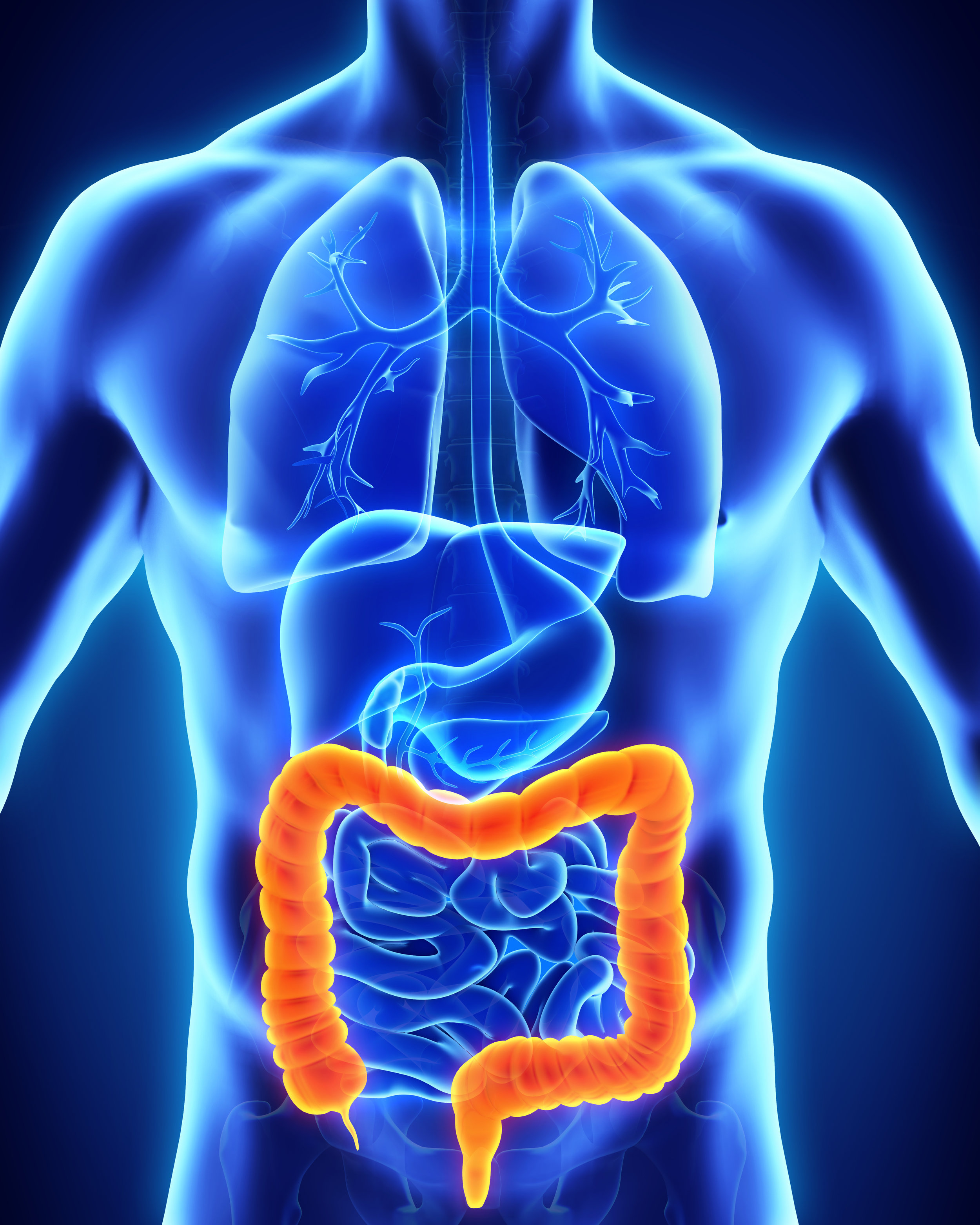 colon-or-large-intestine-structure