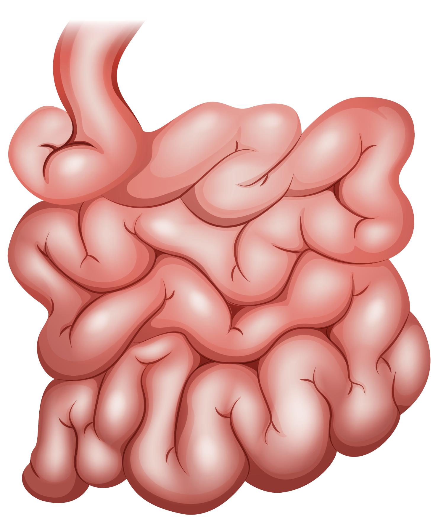 small bowel - Click Here