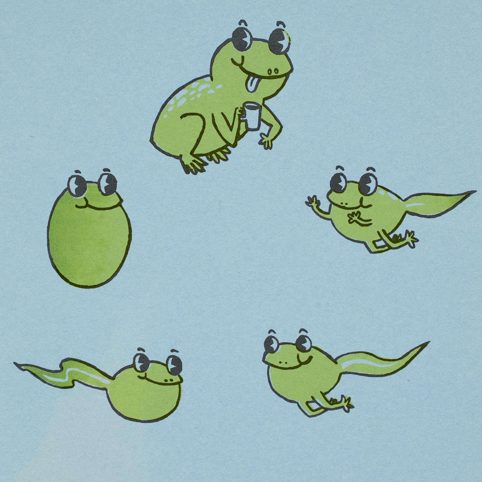 frogs2.jpg