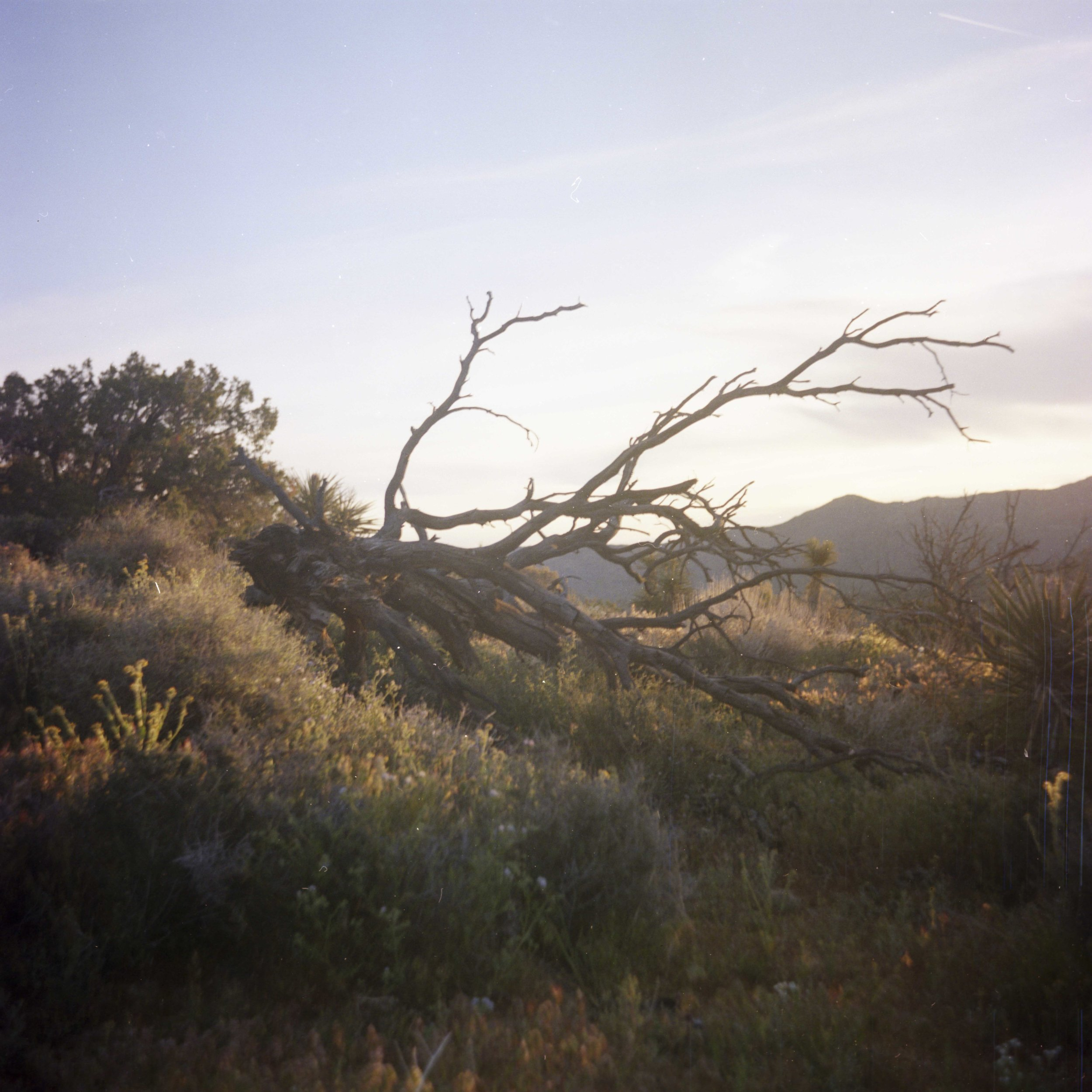 Medium Format Hiking008.jpg