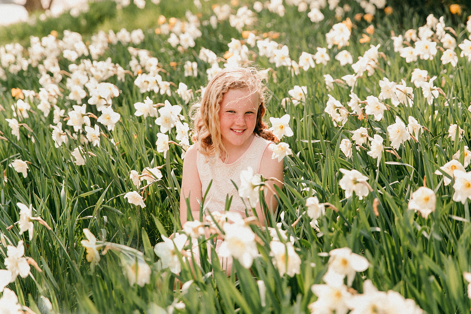 daffodils_wellesley_college.jpg