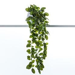 2.Adairs plant.jpg