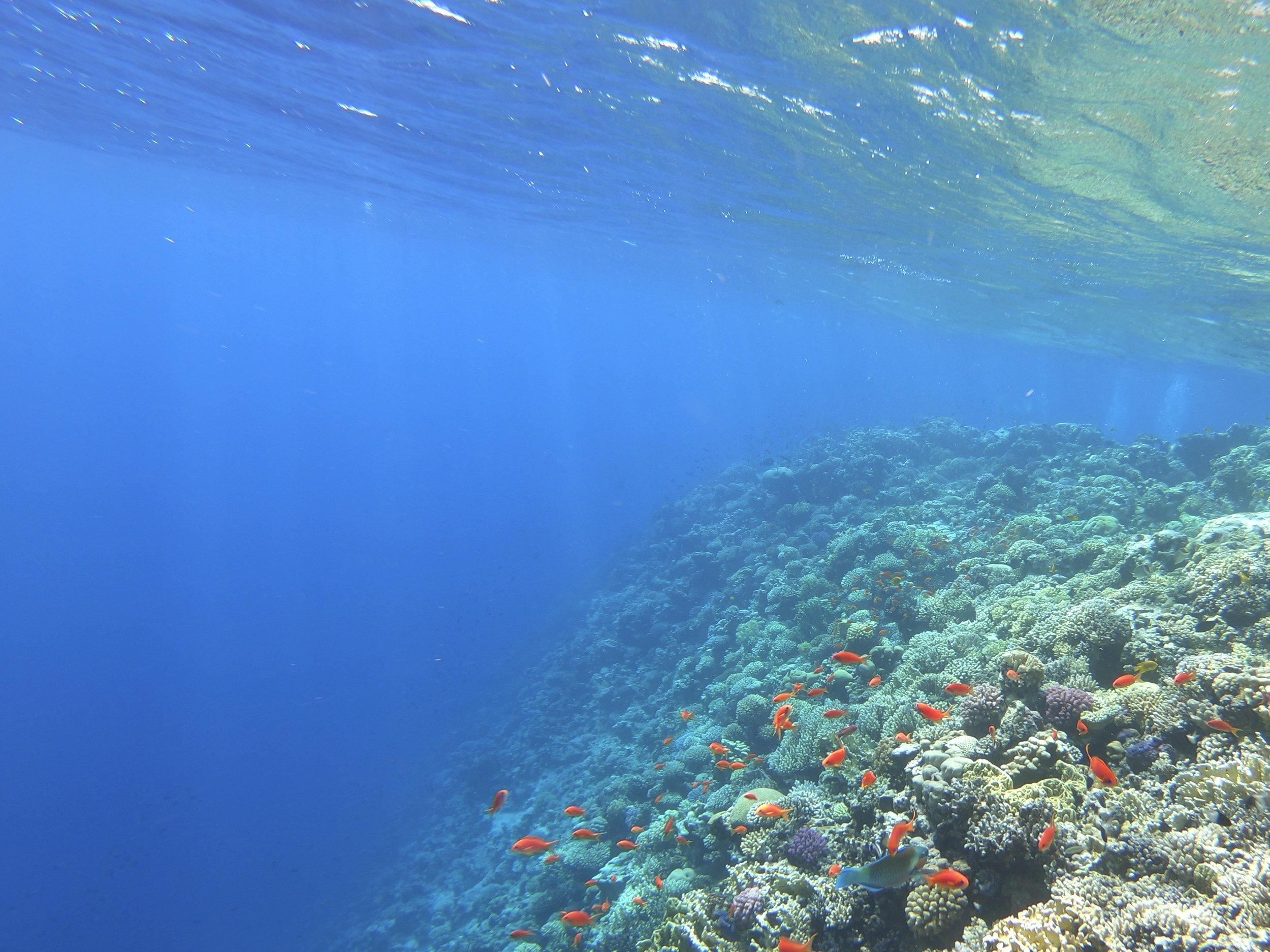 Deep Dive! -