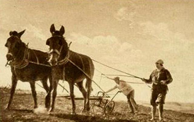 Plowing circa 1910.