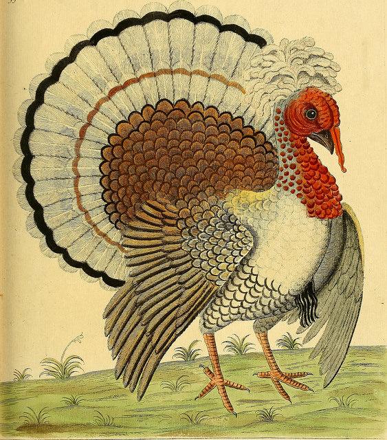 Age of Ecology - David Attenborough's favorite environmental essays - Turkey
