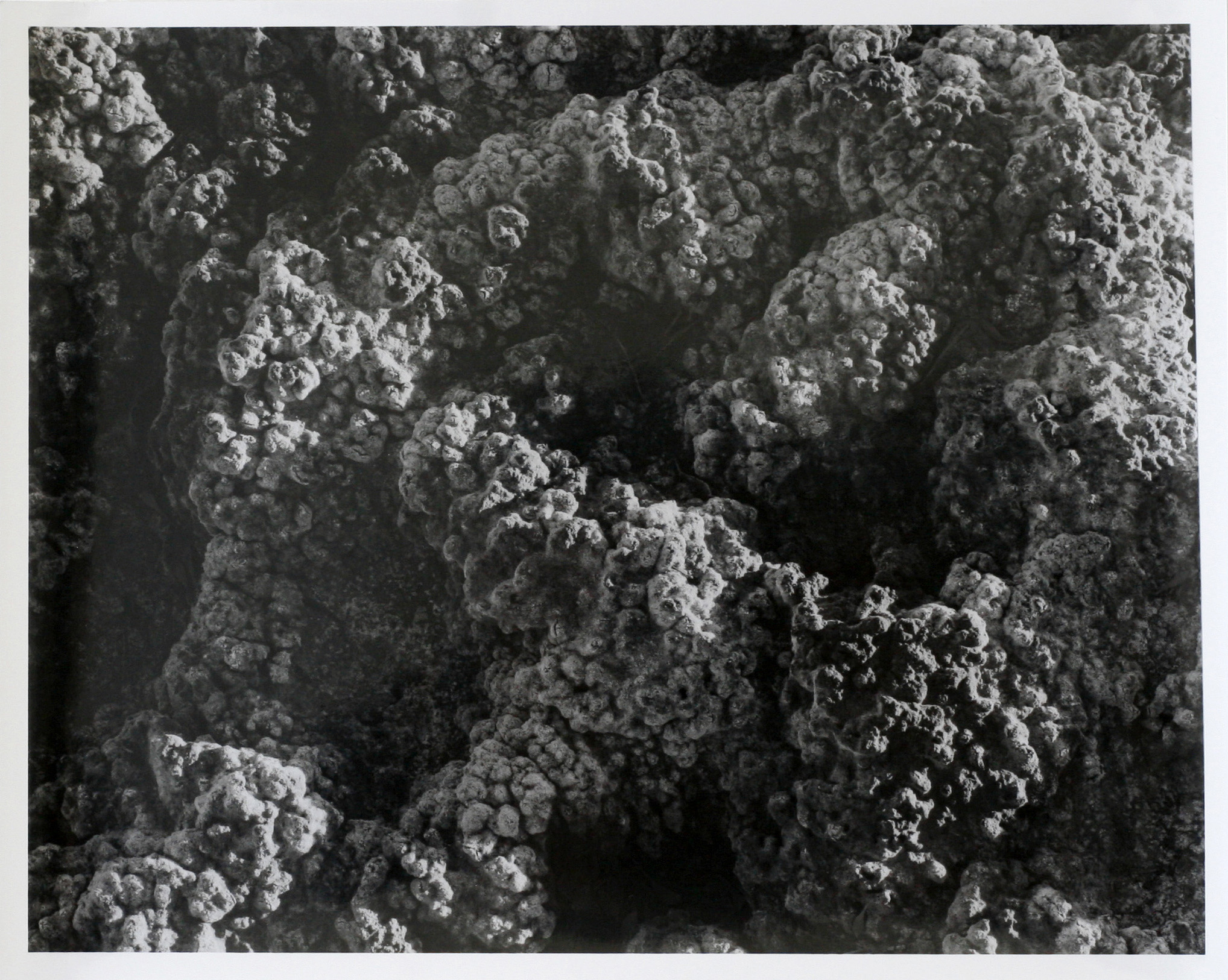 """Relict Ground, 2017  silver gelatin print  8 x 10"""""""